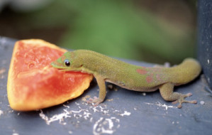 What-do-Lizards-eat